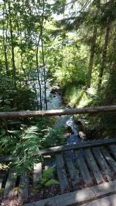 Malin Olsson gamla träbron mellan övre och nedre Kyrktjärn 2