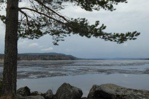 skogsand-bergviken-fota-av-jinger-b-16