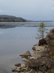 skogsand-bergviken-foto-av-jinger-b-16