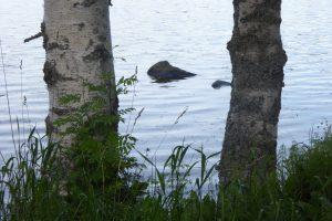 stammar-i-vatten-skogsand-foto-av-jb-16